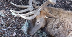 Using your nose to find elk