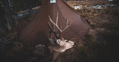 Tips for a successful mule deer hunt during any season