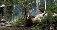 Tag Teaming Elk During An Archery Hunt