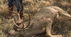 Two Texas men charged with poaching three mule deer