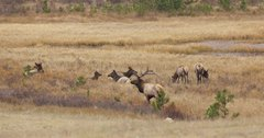 RMEF provides over $500,000 for Wyoming elk