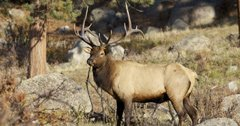 Wyoming considers changes to nonresident elk hunting regulations