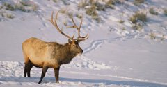 Wyoming hunting, fishing and trapping licenses good for calendar year from when you bought it