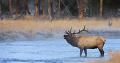 Wyoming bowhunter starts hunting ethics nonprofit