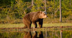Changes approved for Greater Yellowstone grizzly count