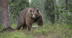 Yellowstone grizzlies retain federal protections